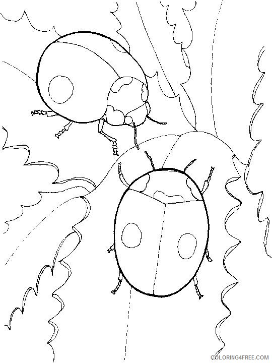 ladybug coloring pages couple Coloring4free