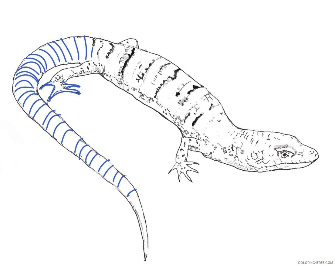 lizard coloring pages blue whiptail Coloring4free
