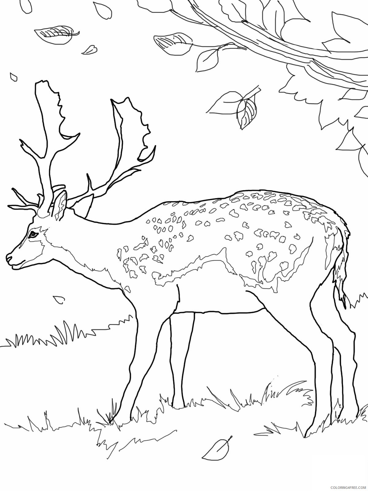 male deer coloring pages Coloring4free