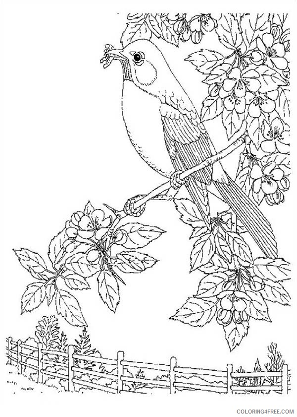 nature coloring pages bird on tree Coloring4free