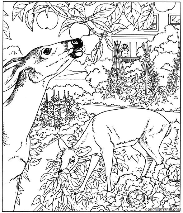 nature coloring pages deer in jungle Coloring4free