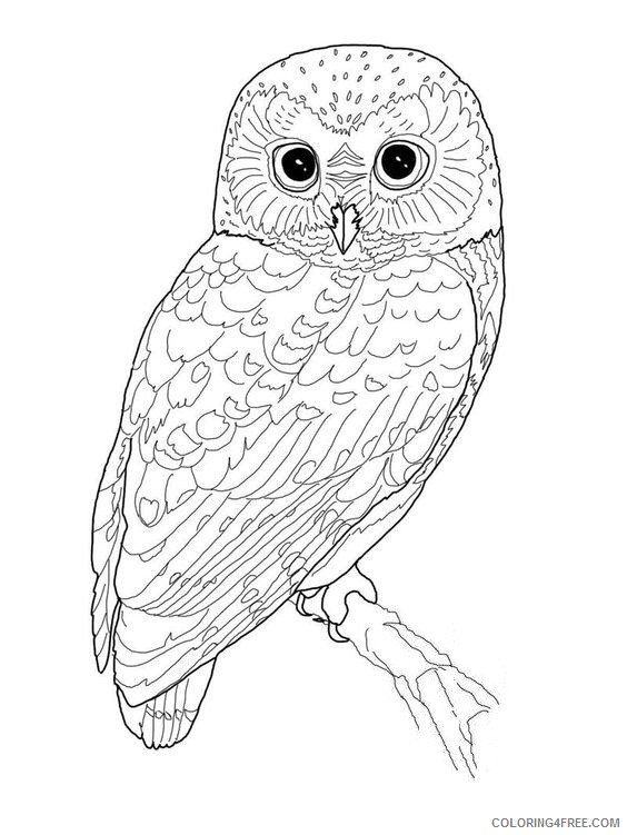 owl bird coloring pages Coloring4free