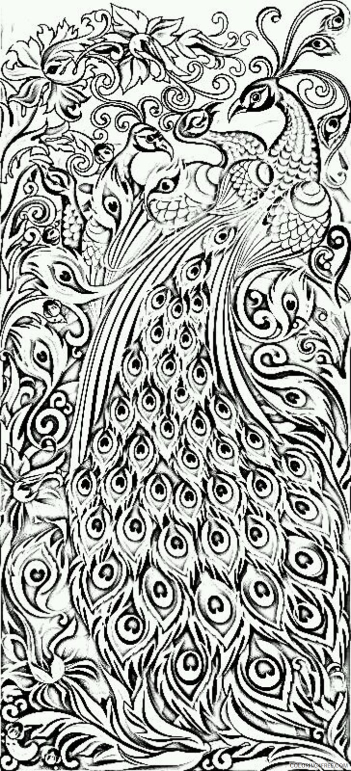 peacock coloring pages difficult for adults Coloring4free