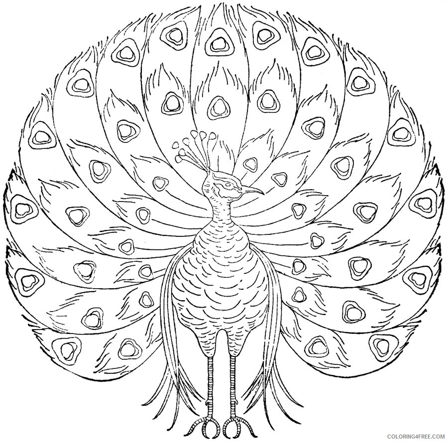 peacock coloring pages free to print Coloring4free