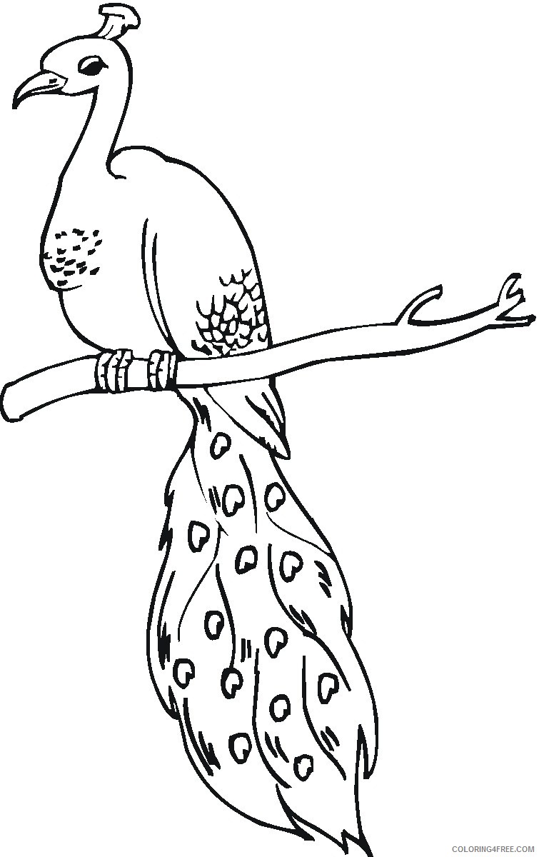 peacock coloring pages on tree branch Coloring4free