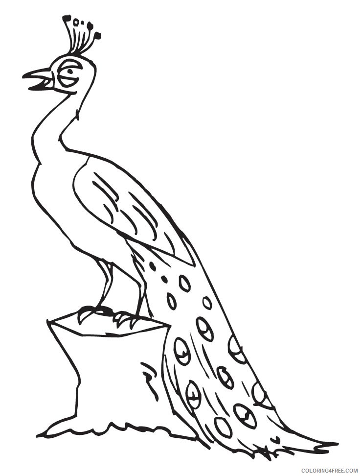 peacock coloring pages tail down for kids Coloring4free
