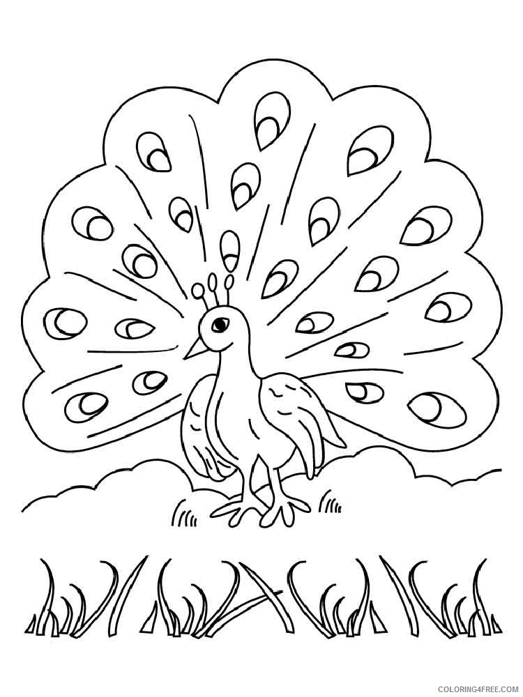 peacock coloring pages tail up for kids Coloring4free
