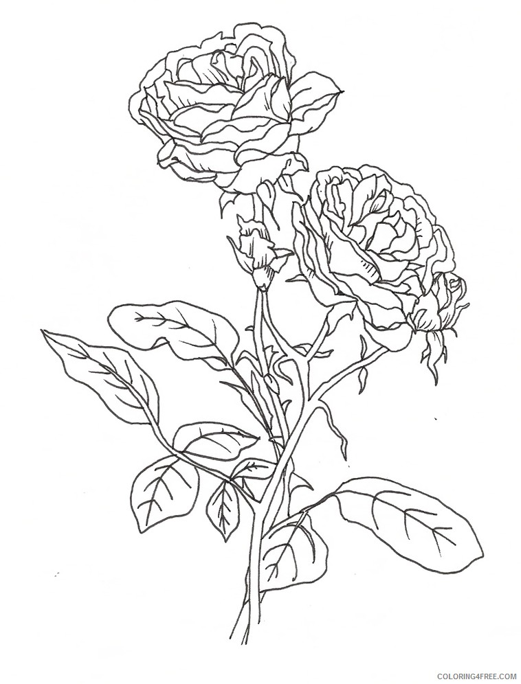 pretty coloring pages of roses Coloring4free