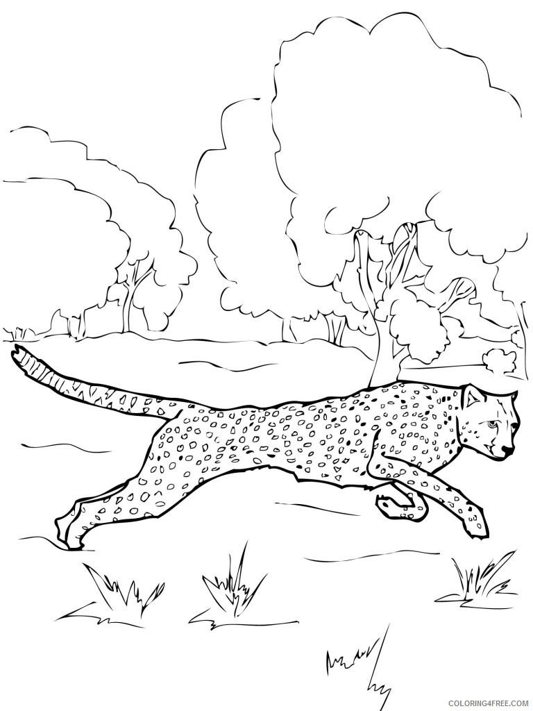 printable cheetah coloring pages Coloring4free