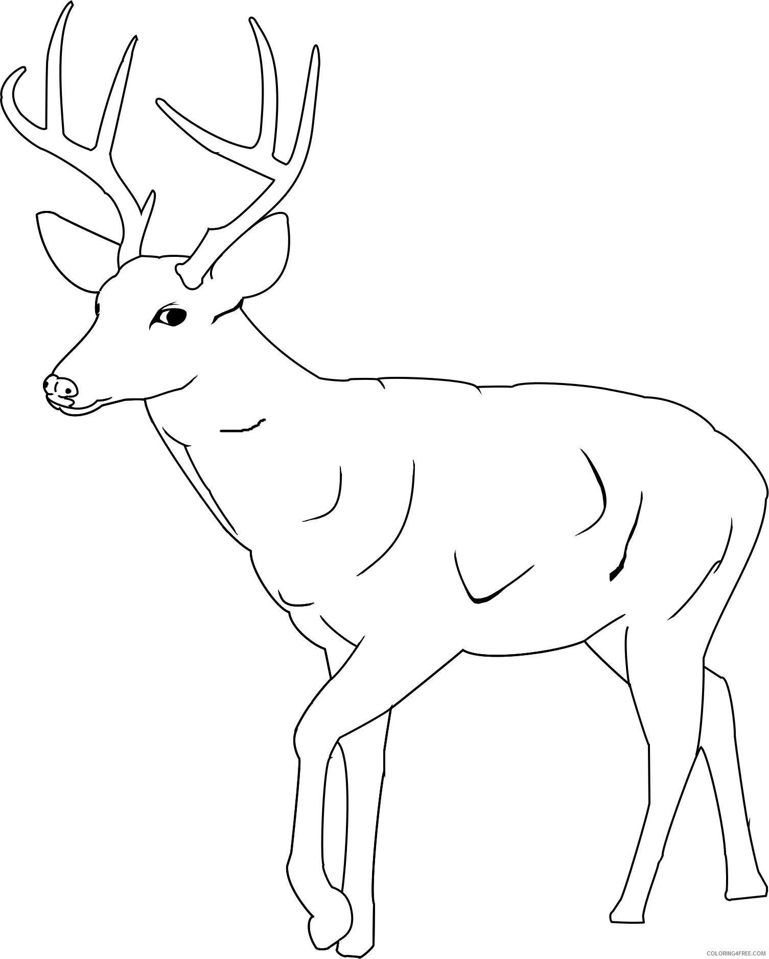 printable deer coloring pages Coloring4free