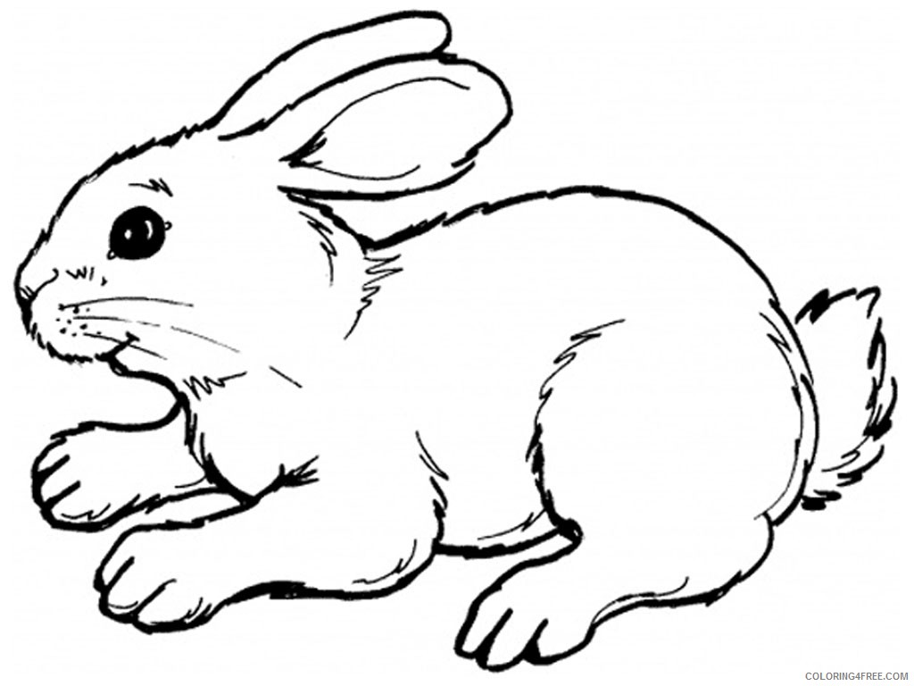 rabbit coloring pages printable Coloring4free