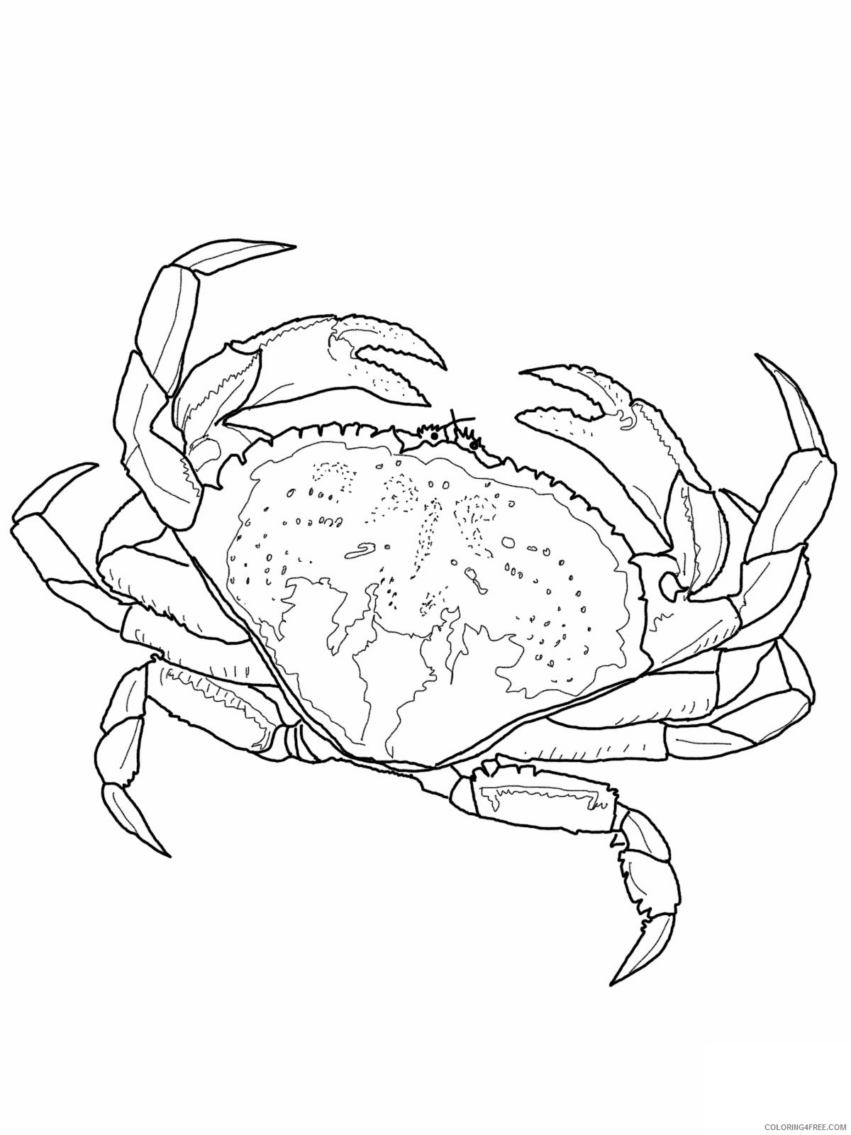 realistic crab coloring pages Coloring4free