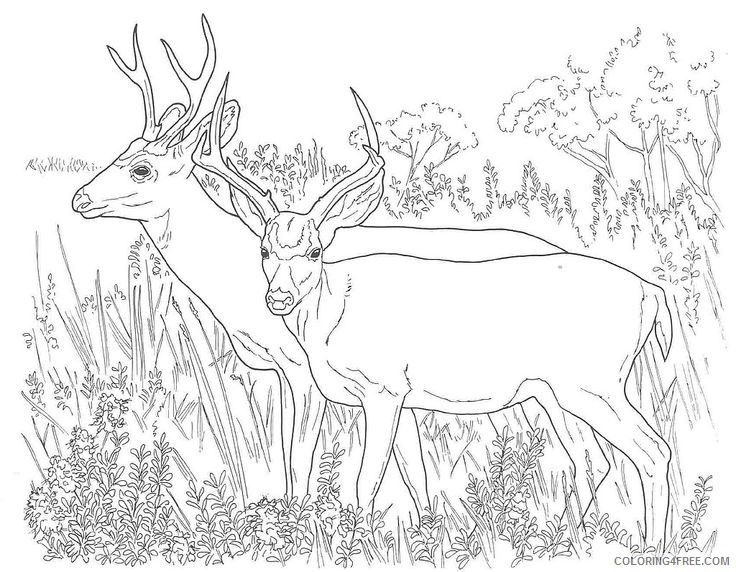 realistic deer coloring pages Coloring4free