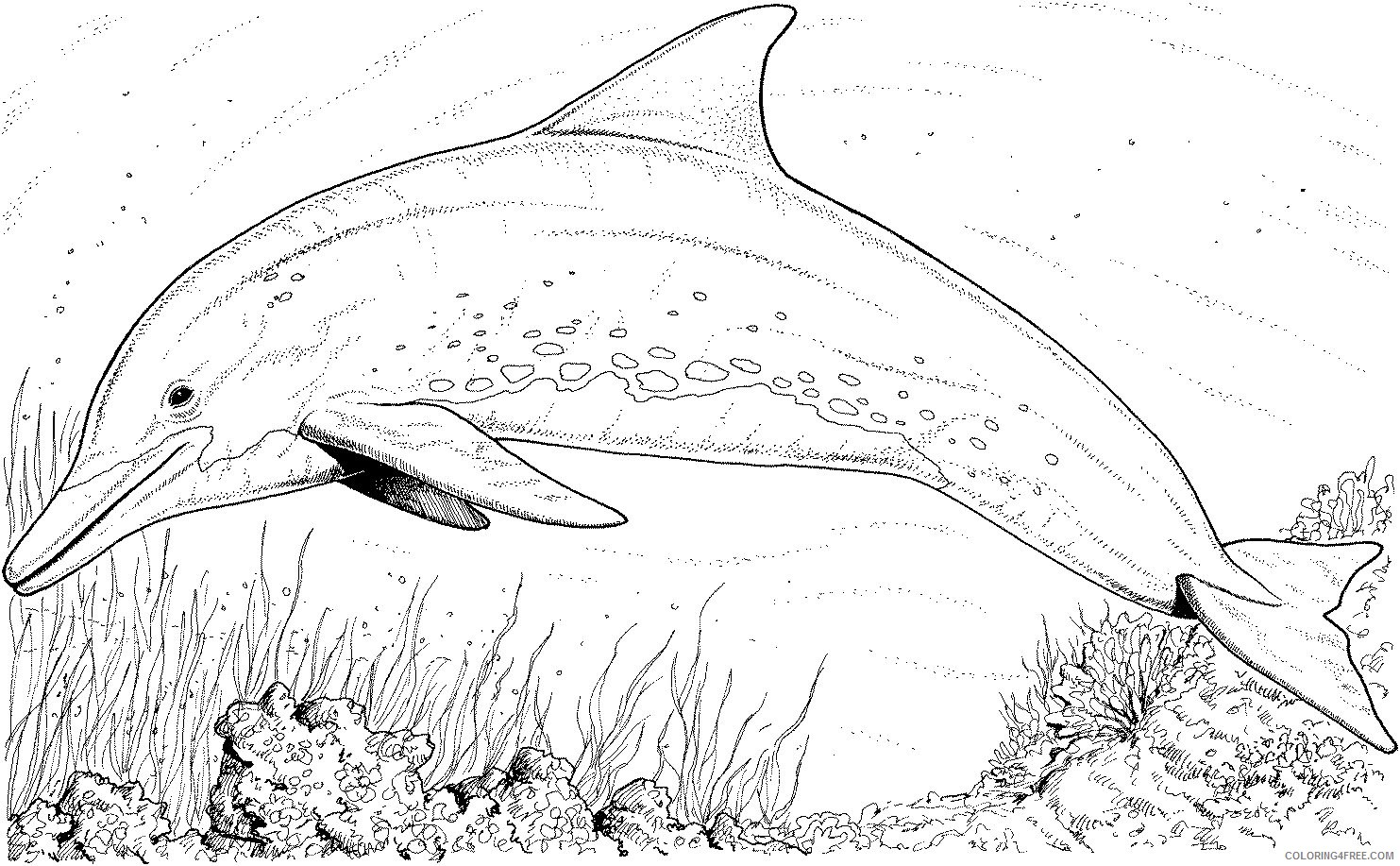 realistic dolphin coloring pages Coloring4free