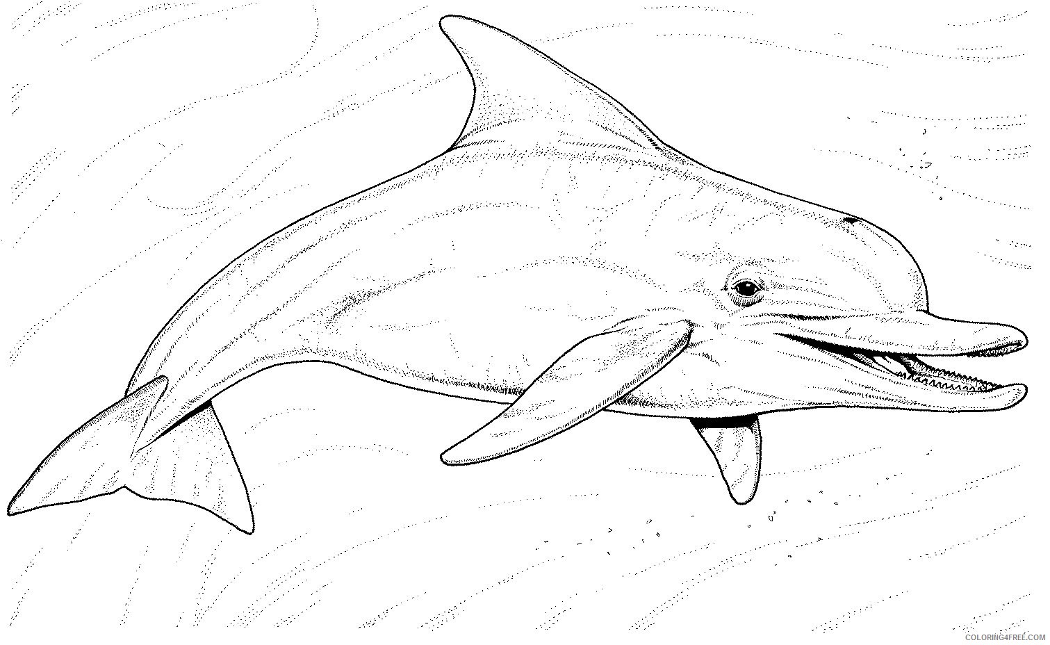 realistic dolphin coloring pages underwater Coloring4free
