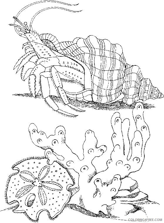 realistic hermit crab coloring pages Coloring4free