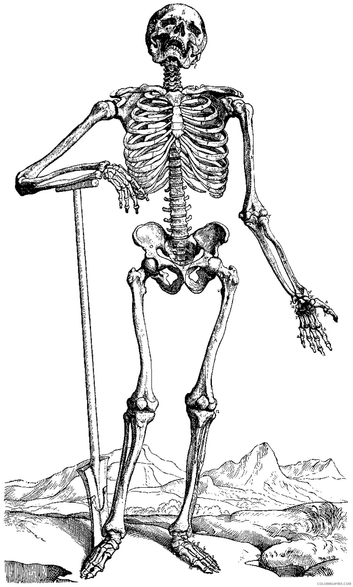 realistic skeleton coloring pages Coloring4free