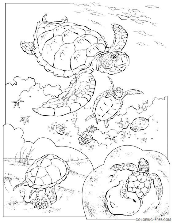 sea turtle coloring pages underwater life Coloring4free