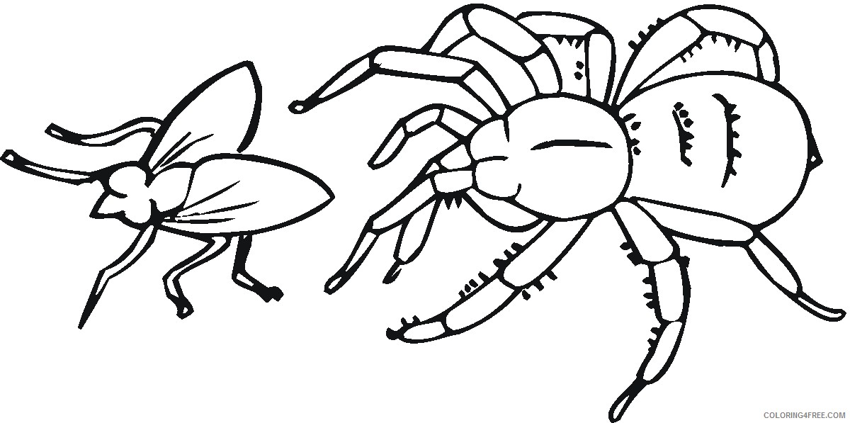 spider coloring pages hunting insect Coloring4free