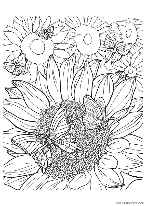 sunflower coloring pages and butterflies Coloring4free