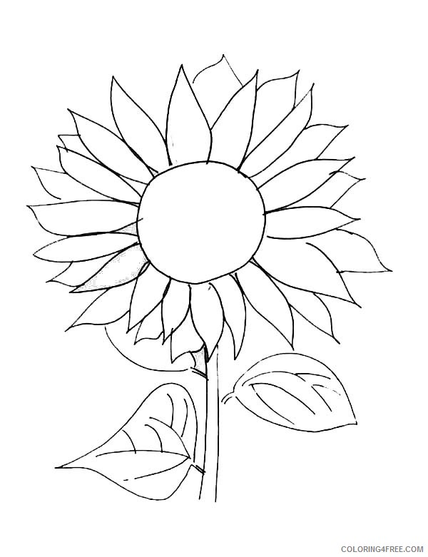 sunflower coloring pages free printable Coloring4free