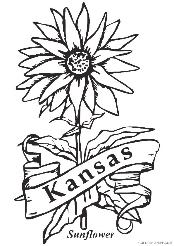 sunflower coloring pages kansas city Coloring4free