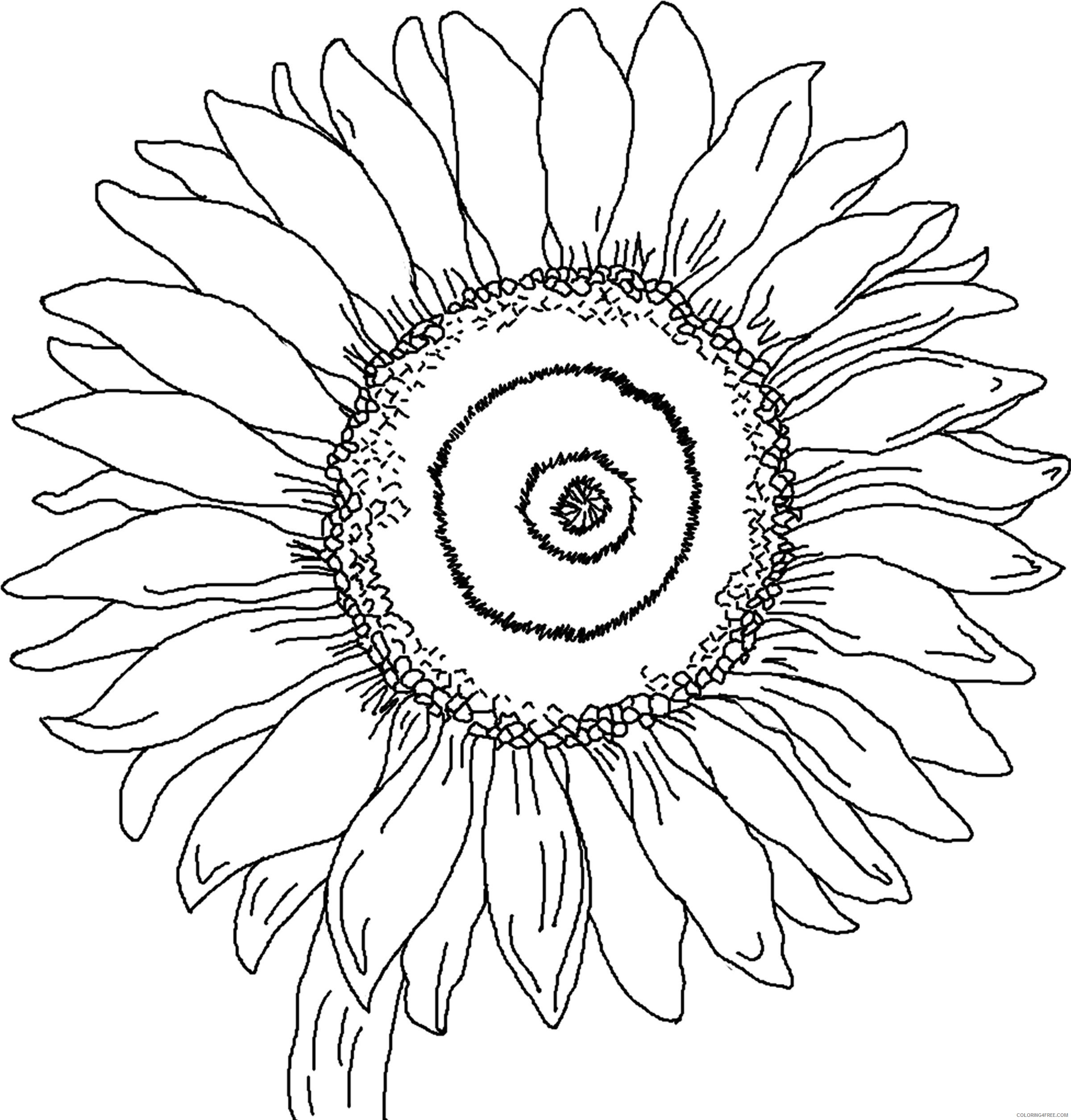 sunflower coloring pages petals Coloring4free