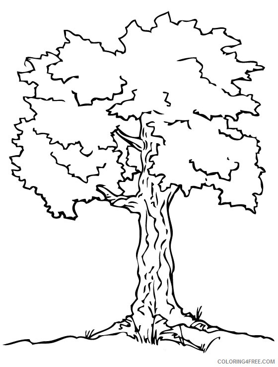 tree coloring pages free to print Coloring4free