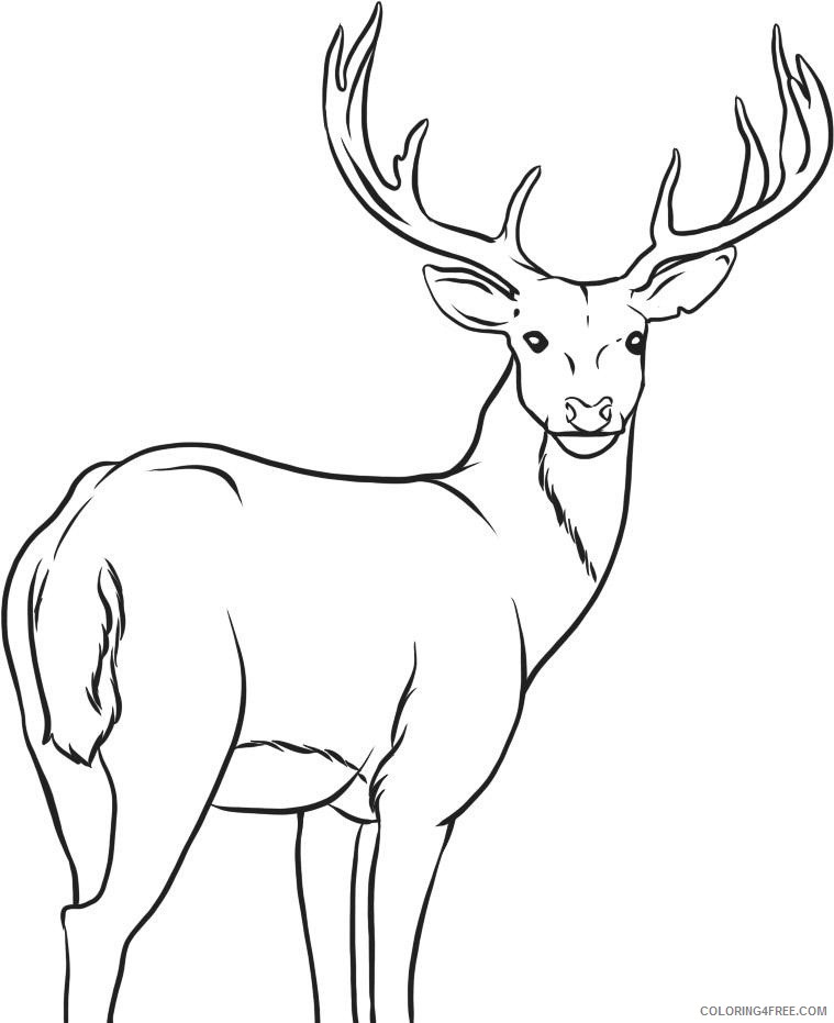 whitetail deer coloring pages Coloring4free