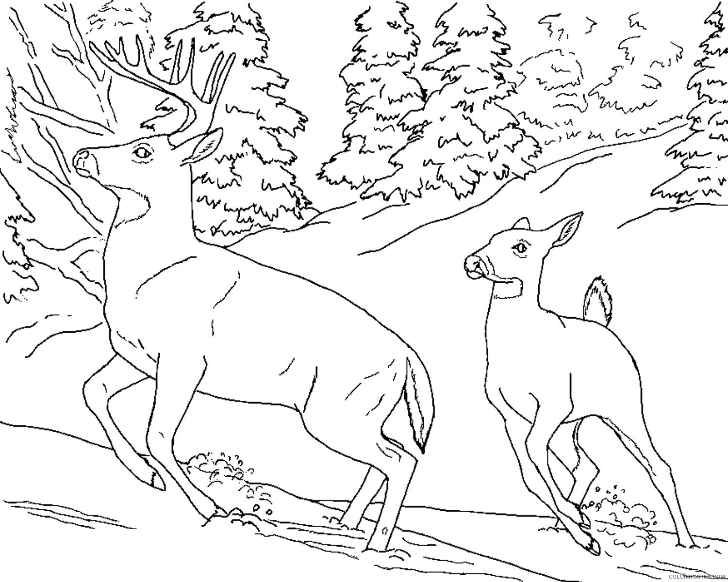 whitetail deer coloring pages to print Coloring4free