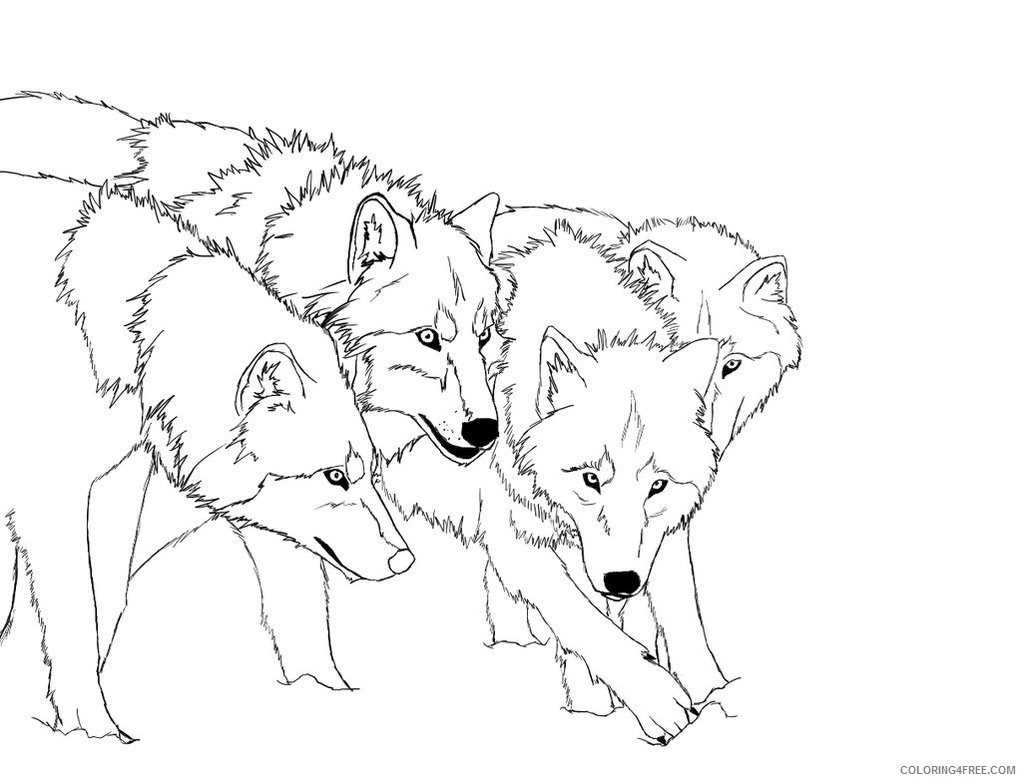 wolf coloring pages wolves hunting Coloring4free