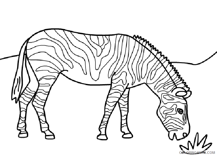 zebra coloring pages eating grass Coloring4free