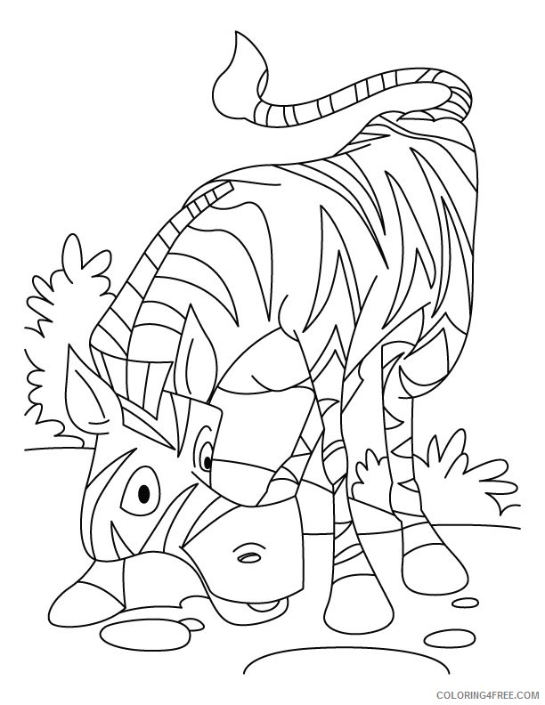 zebra coloring pages for kindergarten Coloring4free