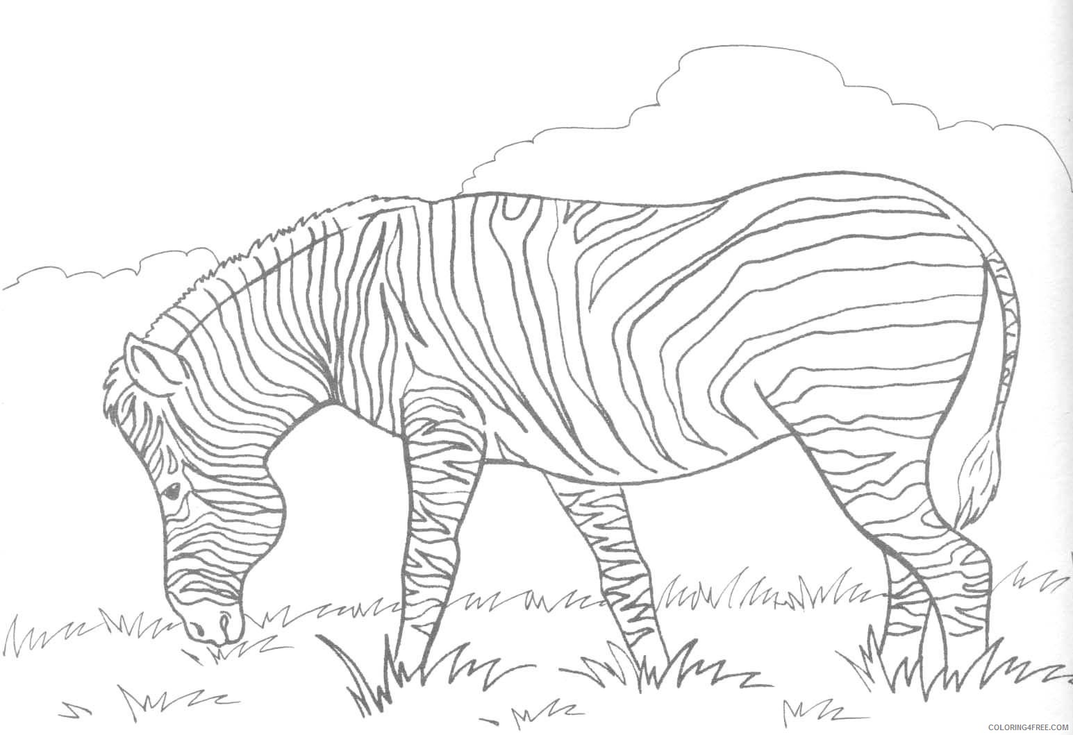 zebra coloring pages in grassland Coloring4free